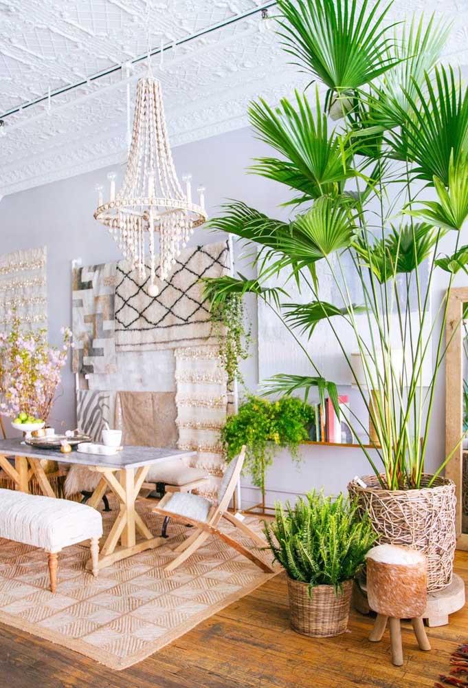 Se o ambiente é boho, a palmeira ráfia é bem vinda
