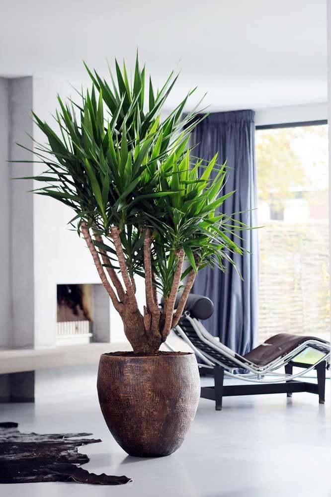 Apesar de linda por si só, a palmeira ráfia consegue ficar ainda melhor em um vaso como esse