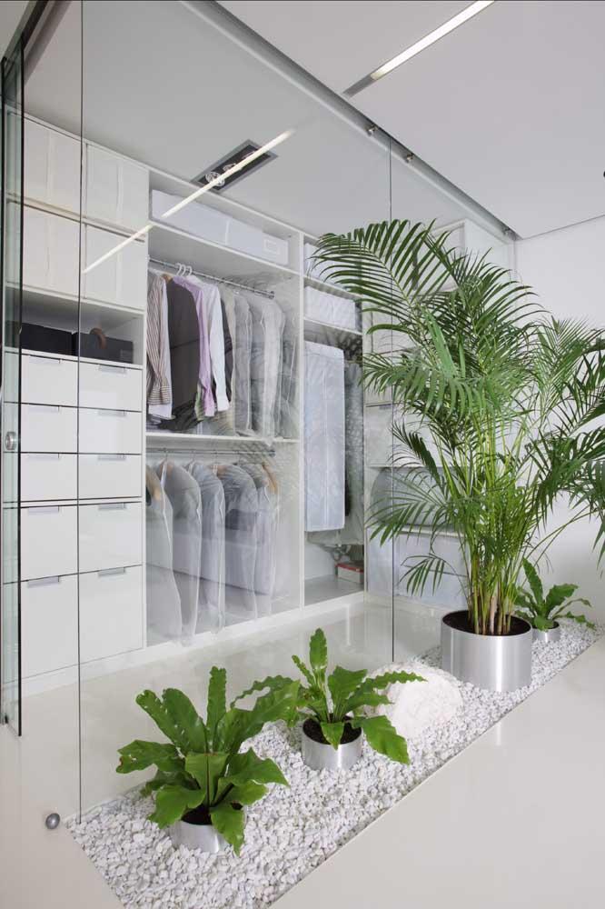 Palmeira ráfia para marcar a divisão entre o closet e o quarto