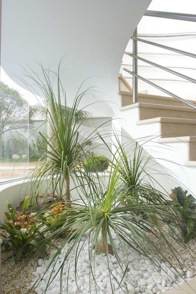 Jardim de inverno com palmeira ráfia: já pensou nisso?