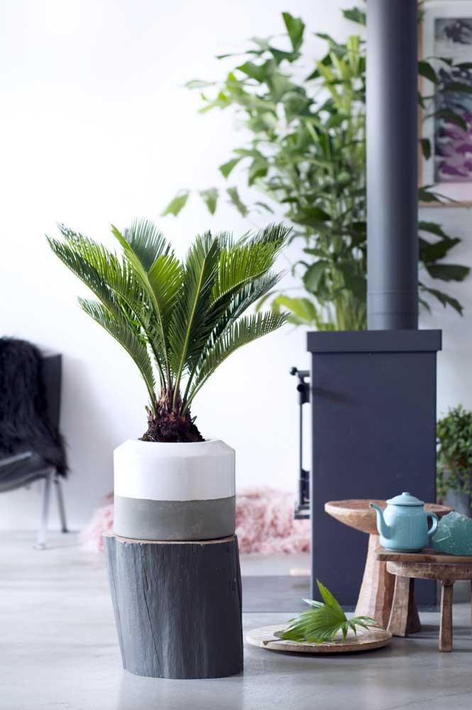 Um tronco e uma palmeira. A solução de paisagismo para sua casa está resolvida