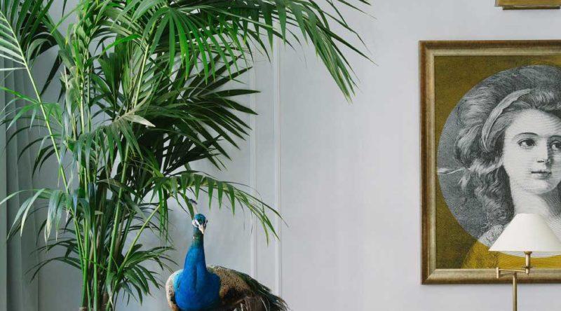 Palmeira ráfia: características, como cuidar, dicas e fotos de decoração