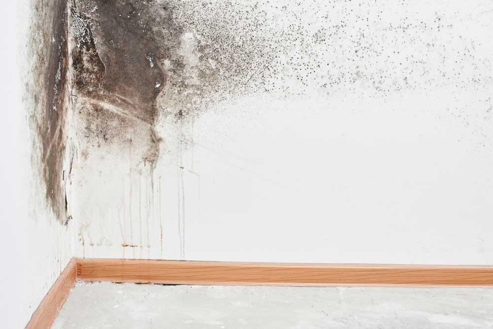 Tenho uma parede com umidade, como decorar?