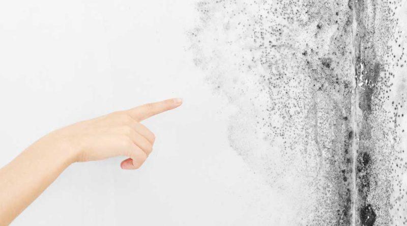 Como tirar umidade da parede: veja dicas simples e úteis