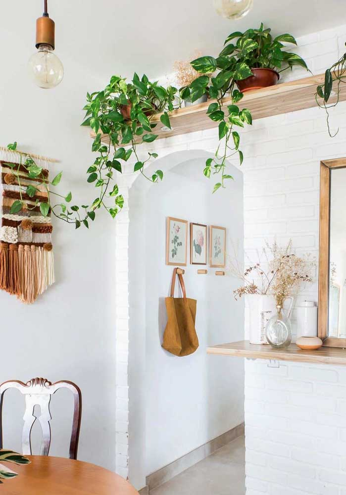 Planta para sala pequena é sinônimo de jiboia!