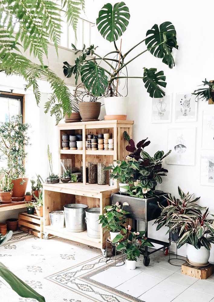 Urban jungle na sala!