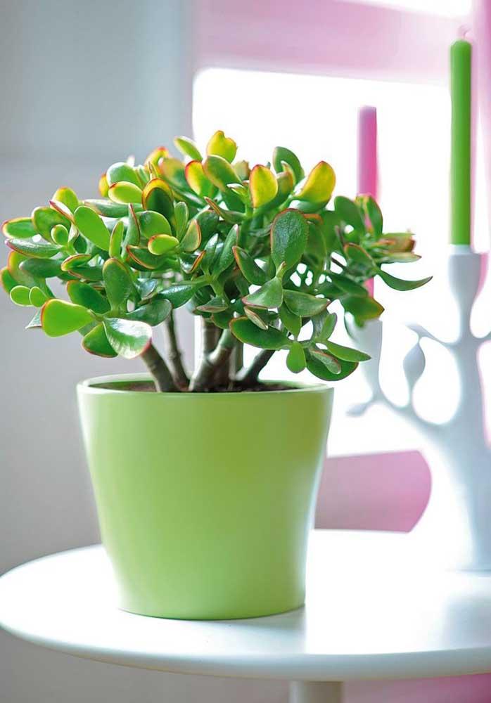 As suculentas também são plantas ideias para salas pequenas