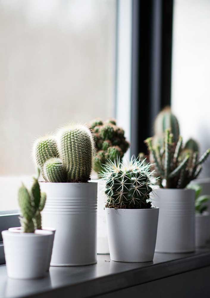 A janela é o melhor lugar para cultivar cactos e suculentas