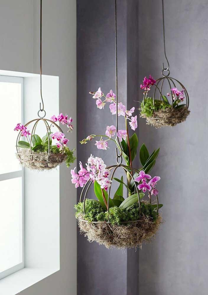 Orquídeas para quem deseja uma sala florida e exuberante
