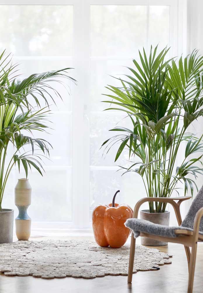 Quanto mais perto as plantas ficarem da janela, melhor