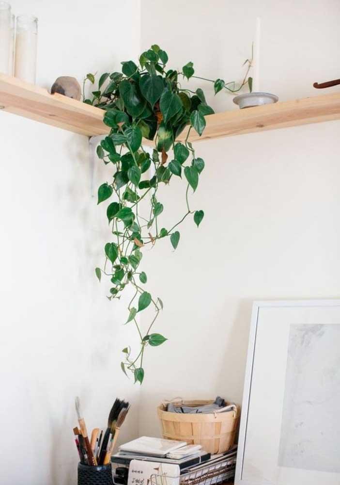 Sala pequena pede por plantas na prateleira