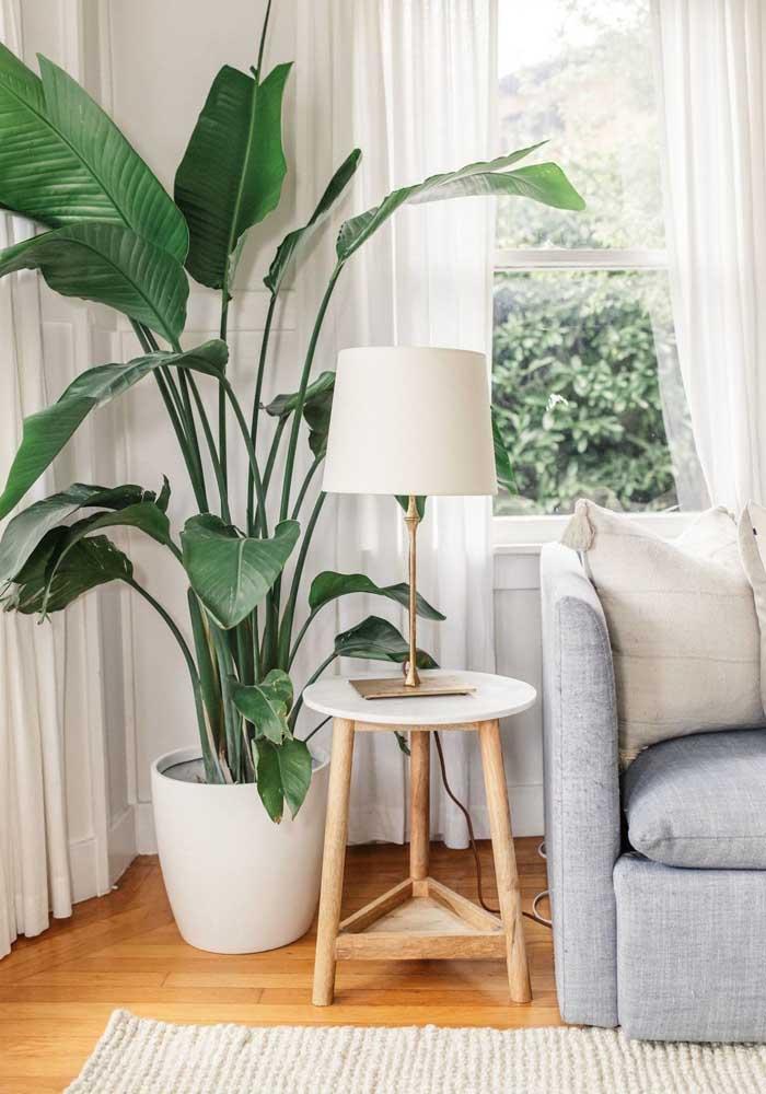 Aquele cantinho atrás do sofá é perfeito para suas plantinhas