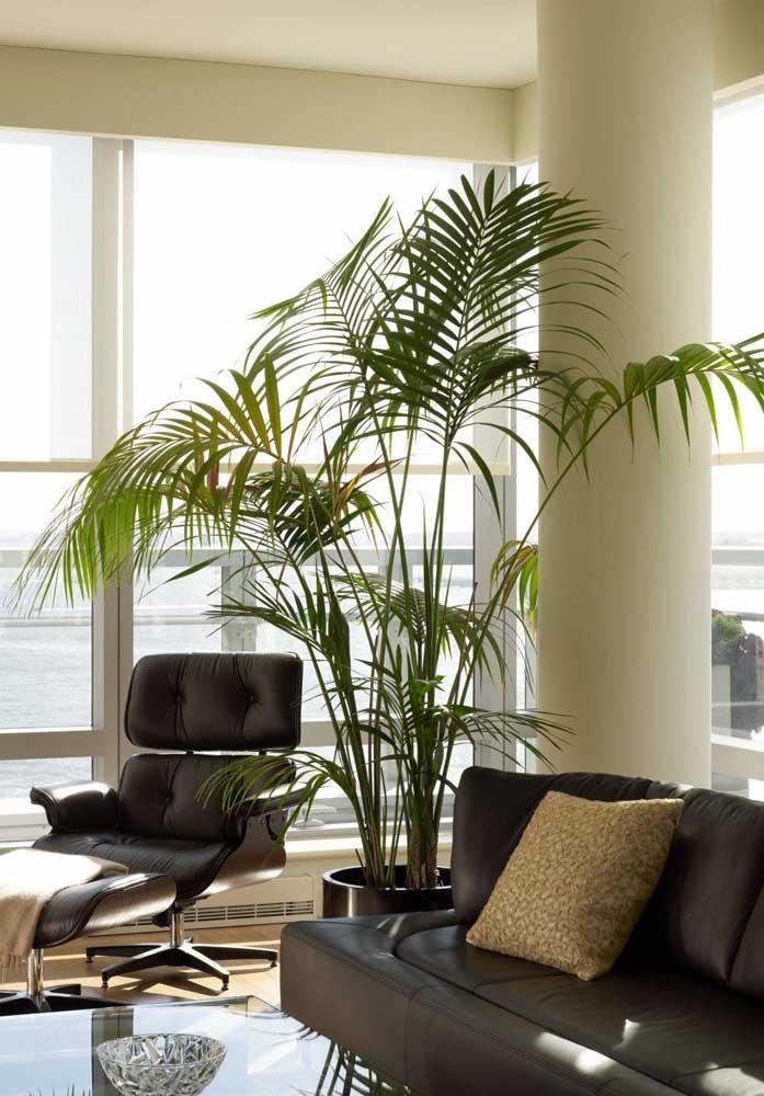 E aqui você vê uma palmeira ráfis muito feliz!