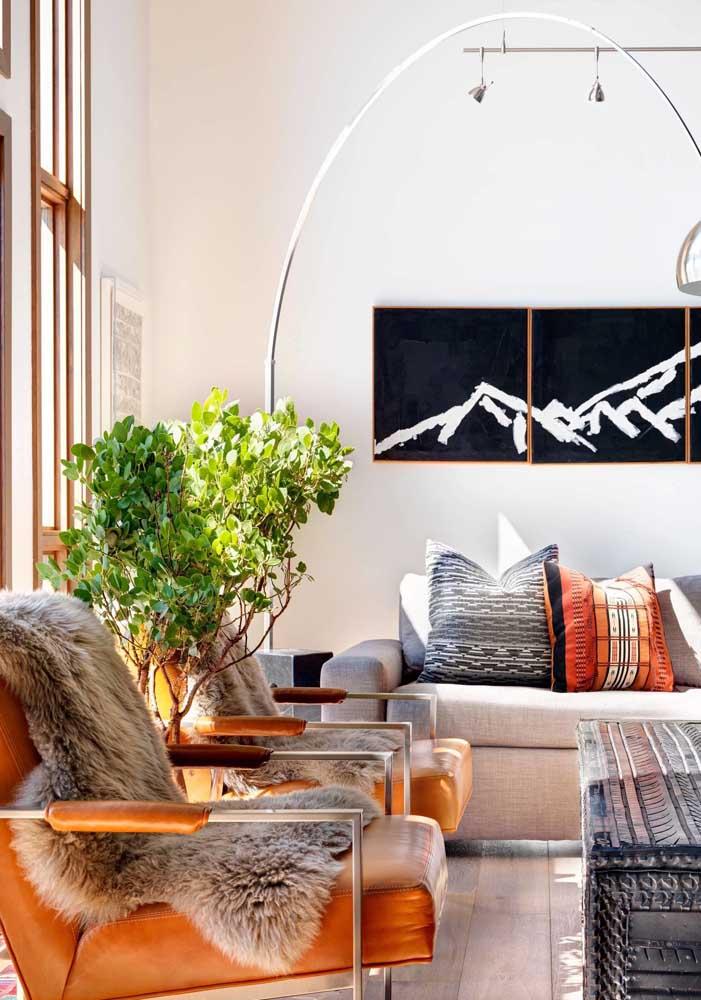 Sol ou sombra? Conheça sua sala antes de colocar plantas