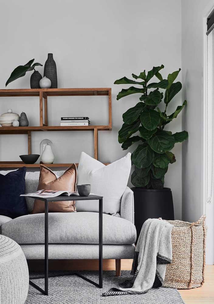 Sala em branco e preto decorada com fícus lirata
