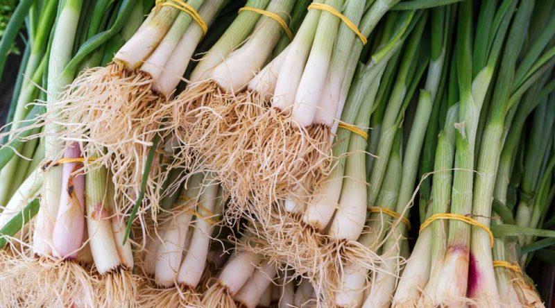 Como plantar cebolinha: tipos, passo a passo e dicas essenciais