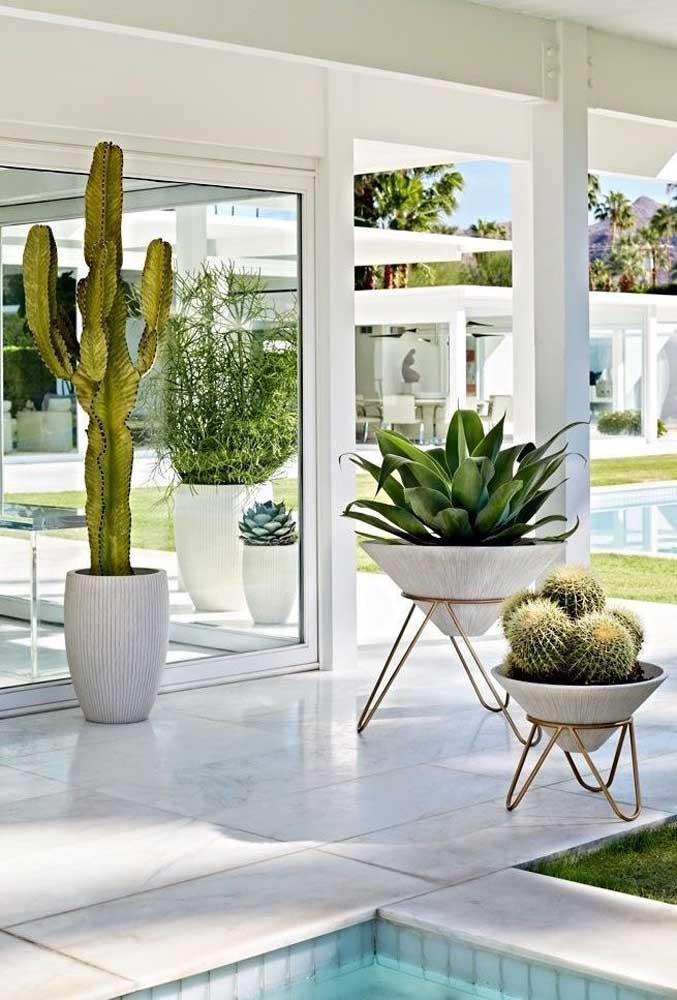 Os cactos são uma ótima opção de planta ornamental de sol