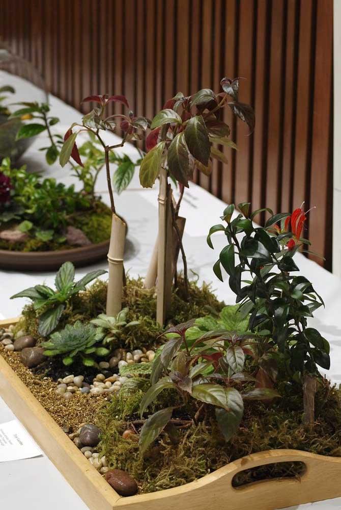 Columéia: planta ornamental com flor para dentro de casa
