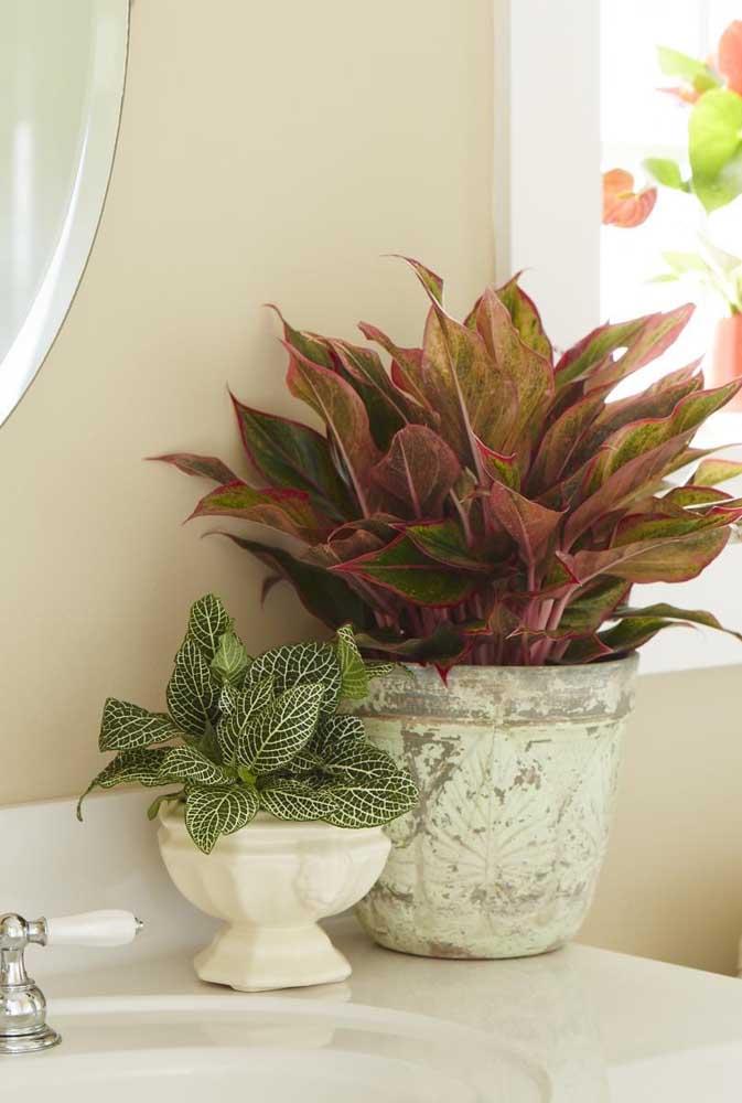 Aglaonema no banheiro: planta ornamental perfeita para dentro de casa