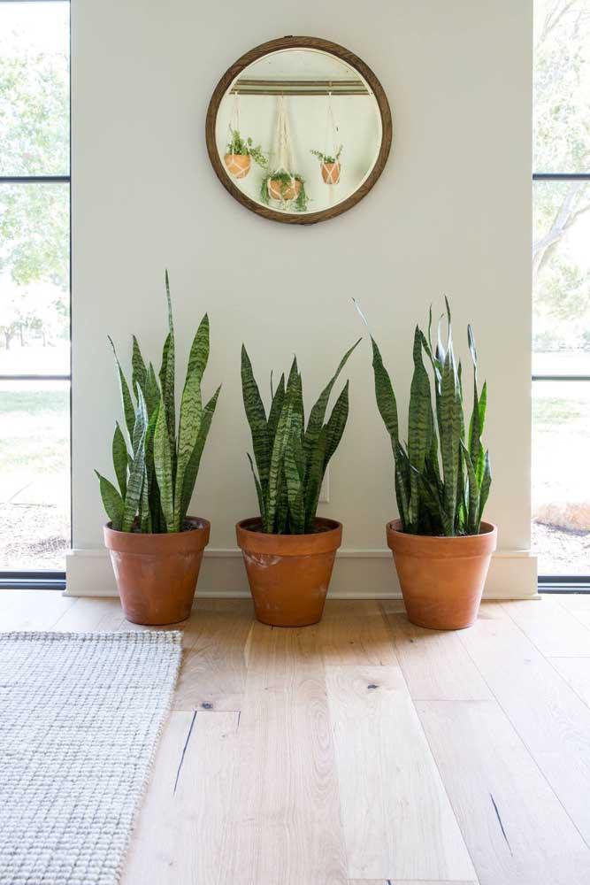 Os vasos de barro garantem um aspecto ainda mais rústico para a planta ornamental