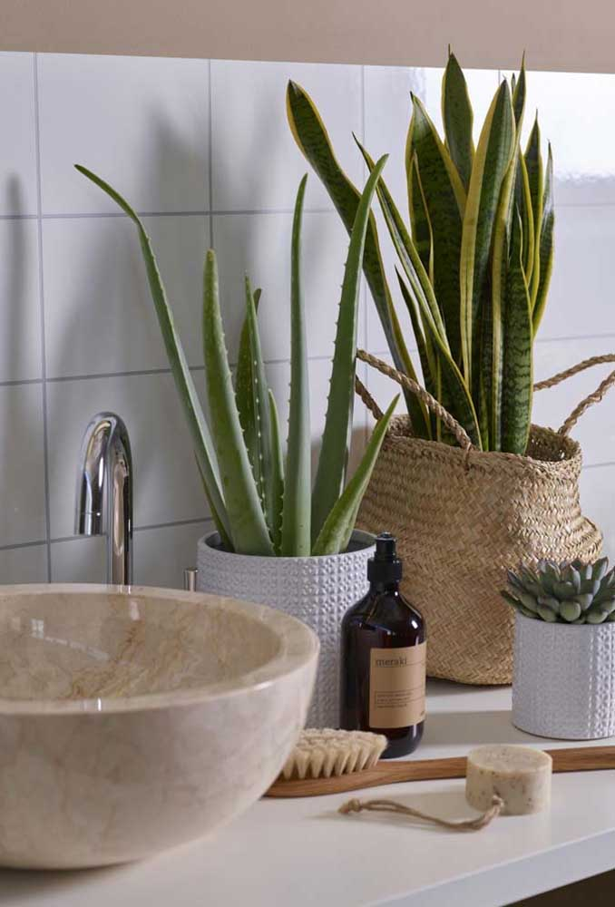 Planta ornamental para o banheiro: aposte na Espada de São Jorge