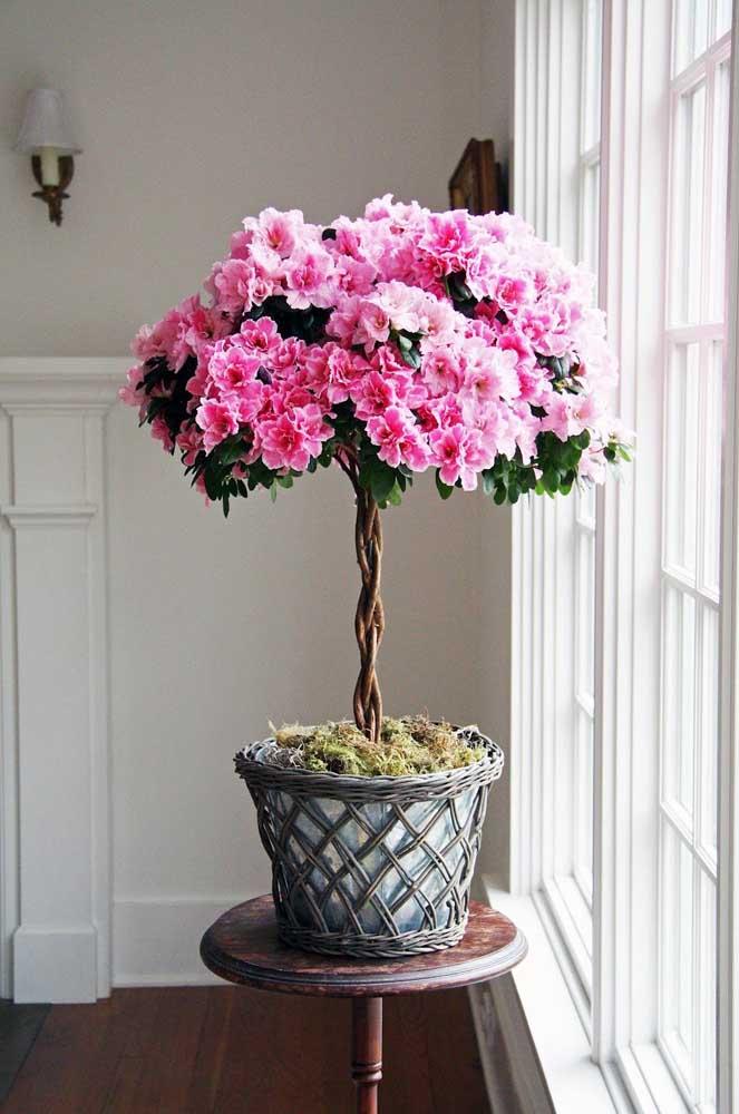 Que tal um bonsai florido para alegrar sua casa?