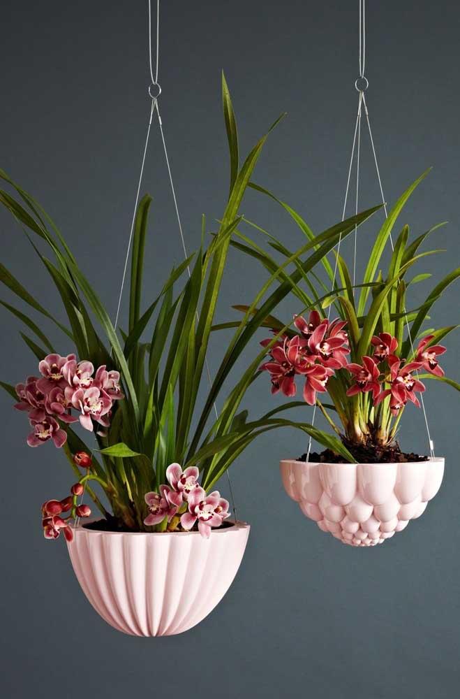 Orquídeas! Impossível não se encantar com a beleza exótica dessa planta ornamental