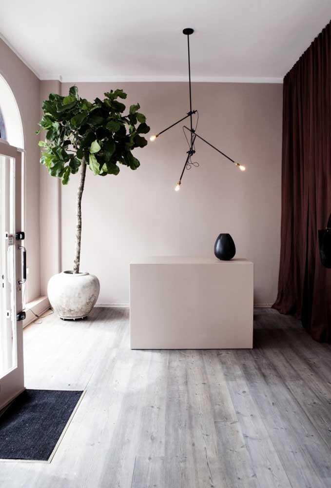 Quer uma planta ornamental grande para salas? Aposte na Figueira Lira
