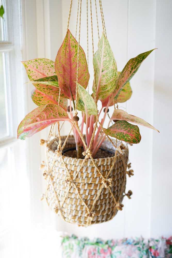 Que tal um belo macramê para sua planta ornamental?