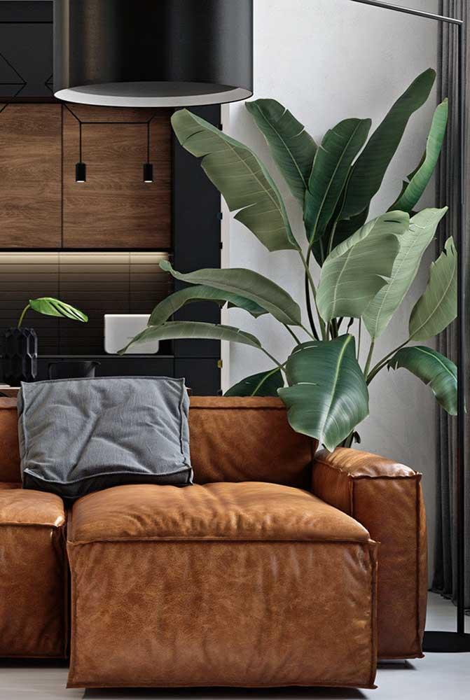 Os tons de verde da planta ornamental fazem parte da paleta de cores do ambiente