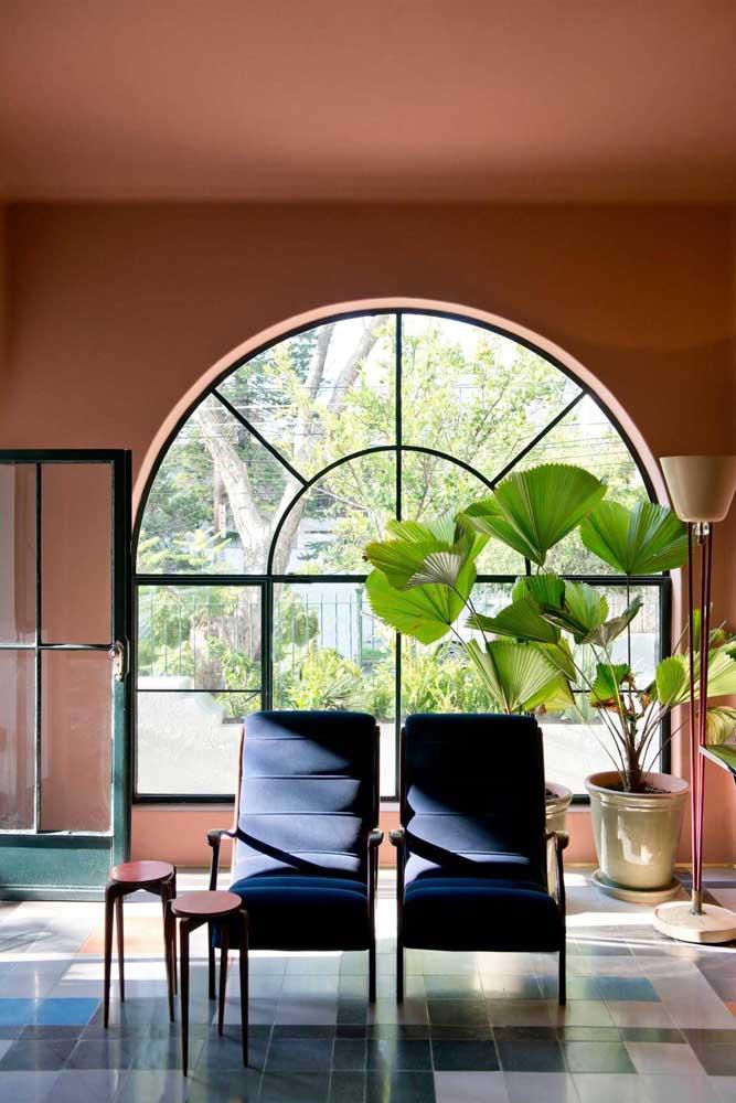 Perto da janela é sempre um bom lugar para cultivar plantas ornamentais