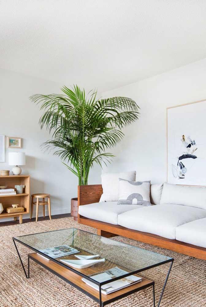 O tom verde vivo da planta ornamental forma um lindo contraste com ambientes de cores claras