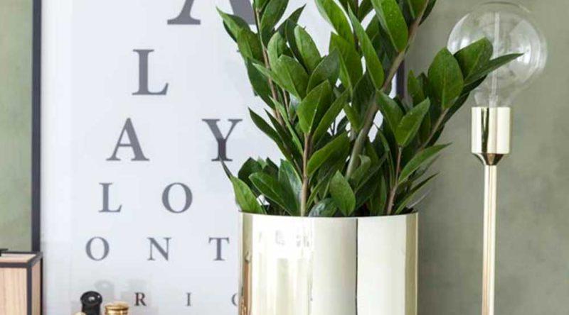 Plantas ornamentais: o que são, exemplos, espécies e fotos incríveis para você ver