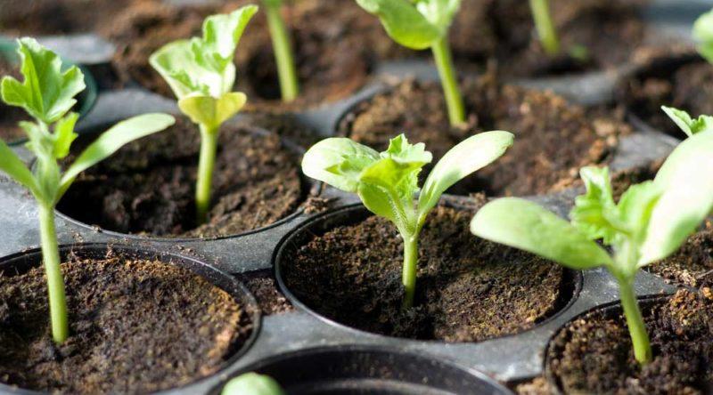 Temperos para plantar em casa: 8 ervas aromáticas para você conhecer
