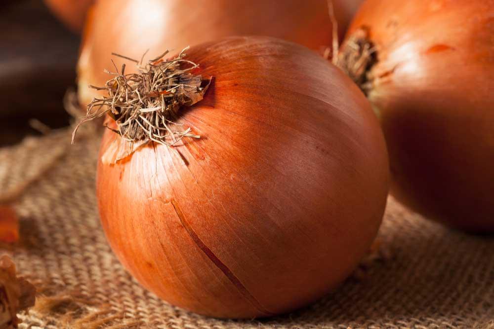 Como plantar cebola em vaso